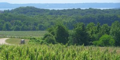 Grand Traverse vineyard