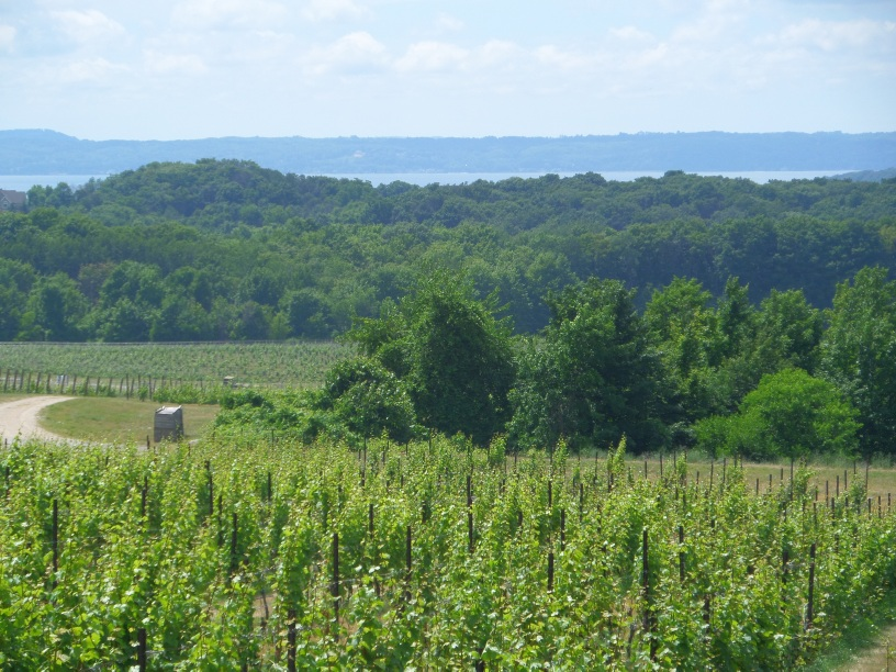 Grand Traverse vineyard