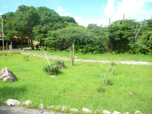 Cacti all around the island