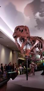 T Rex Field Museum